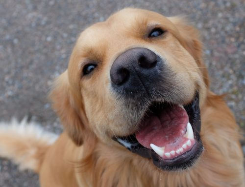 Protect Your Pet's Pearly Whites